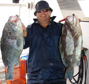 Blue Maori Cod