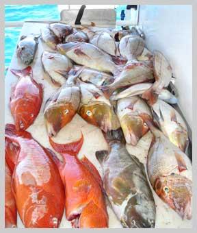 Free Fish Market!