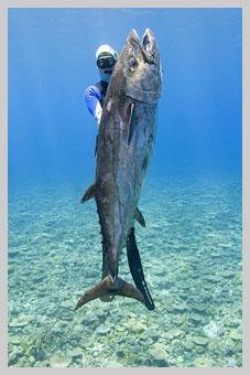 U/W Tuna