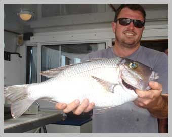 big-eyed-sea-bream.jpg